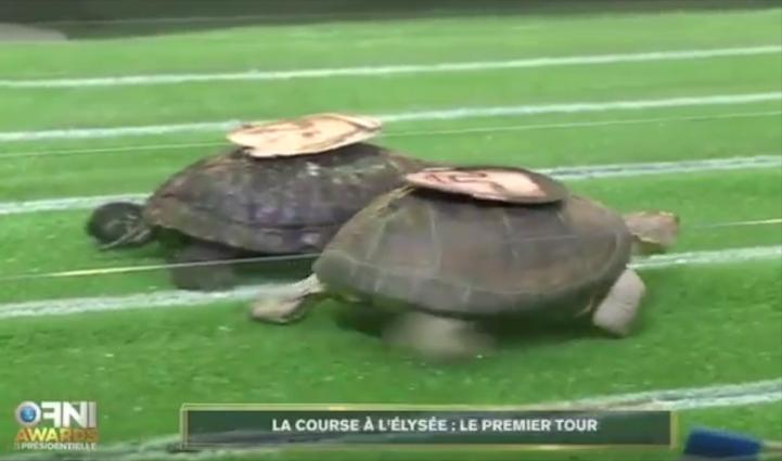 Les tortues Macron Lepen