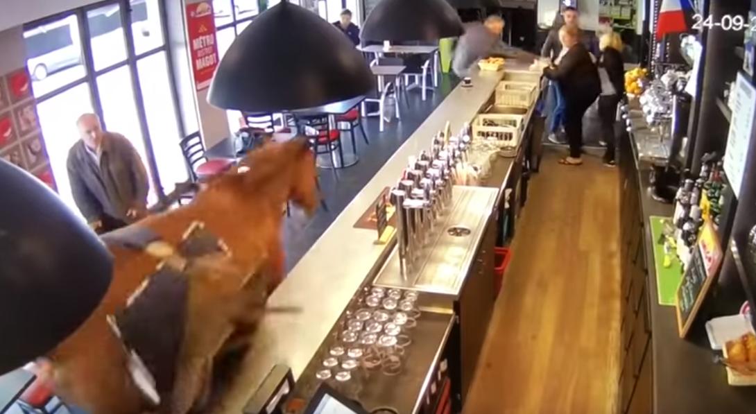 Chantilly : Un cheval de course fait irruption dans un bar !
