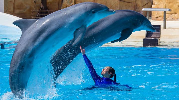 Parc Astérix : L'attraction delphinarium ferme ses portes