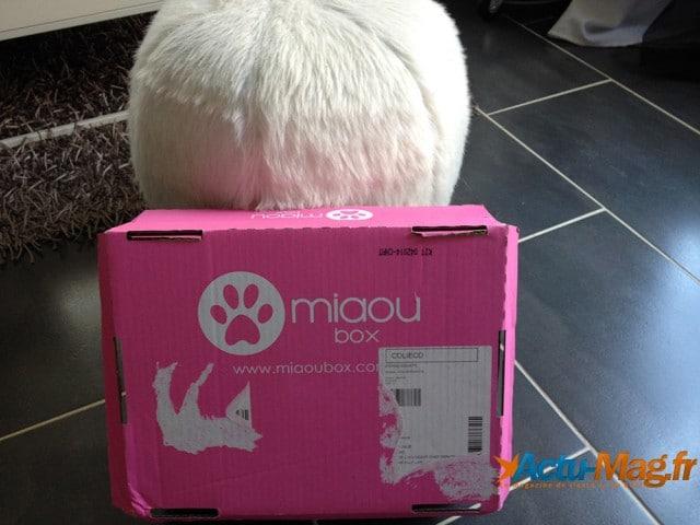 Miaoubox - Actu-mag (2)