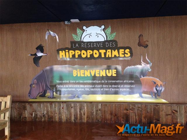 Le parc de Beauval possède désormais deux hippopotames / Photo Julie R. Actu-Mag.fr