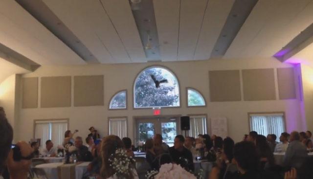 Un hibou sonné par une vitre / Capture Youtube