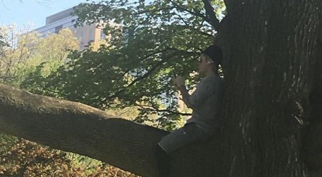 Justin Bieber dans un arbre à Boston / Capture Twitter @justinbie8er94