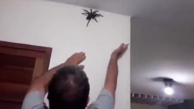 Il découvre l'une des plus grosse araignée au monde dans sa maison / Capture Youtube