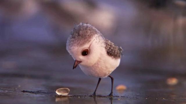 Piper le nouveau court métrage de Disney Pixar / Capture Youtube