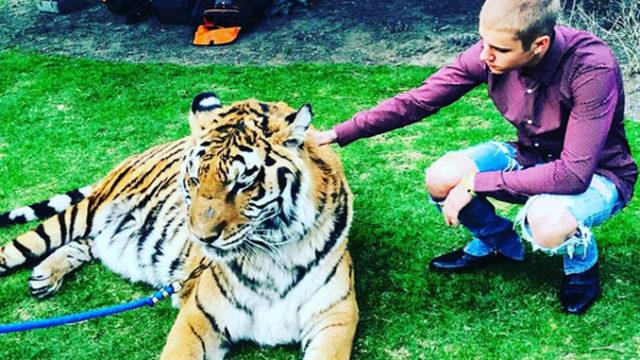 Justin Bieber pose avec un tigre / Capture Instagram alexhaditaghi