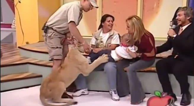 Un enfant attaqué par un lion en direct à la télévision mexicaine / Capture Youtube