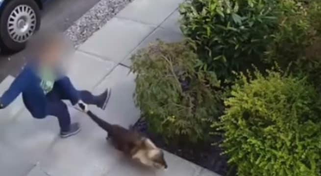 Un chat maltraité en Angleterre par un enfant de... 5 ans / Capture Youtube